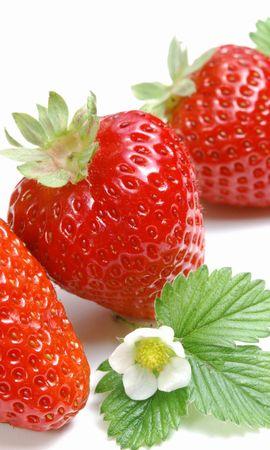 39508 télécharger le fond d'écran Fruits, Nourriture, Fraise - économiseurs d'écran et images gratuitement