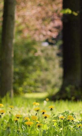 138823 скачать обои Трава, Одуванчики, Природа, Цветы - заставки и картинки бесплатно