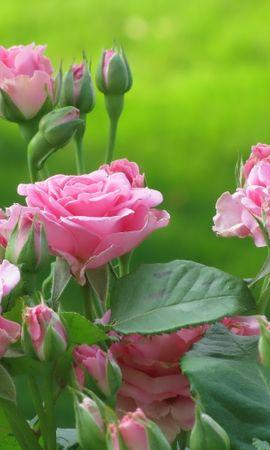 48939 скачать обои Растения, Цветы - заставки и картинки бесплатно