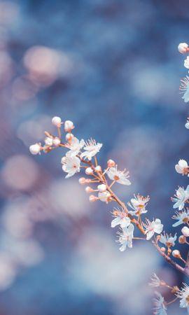 39149 descargar fondo de pantalla Plantas, Flores: protectores de pantalla e imágenes gratis