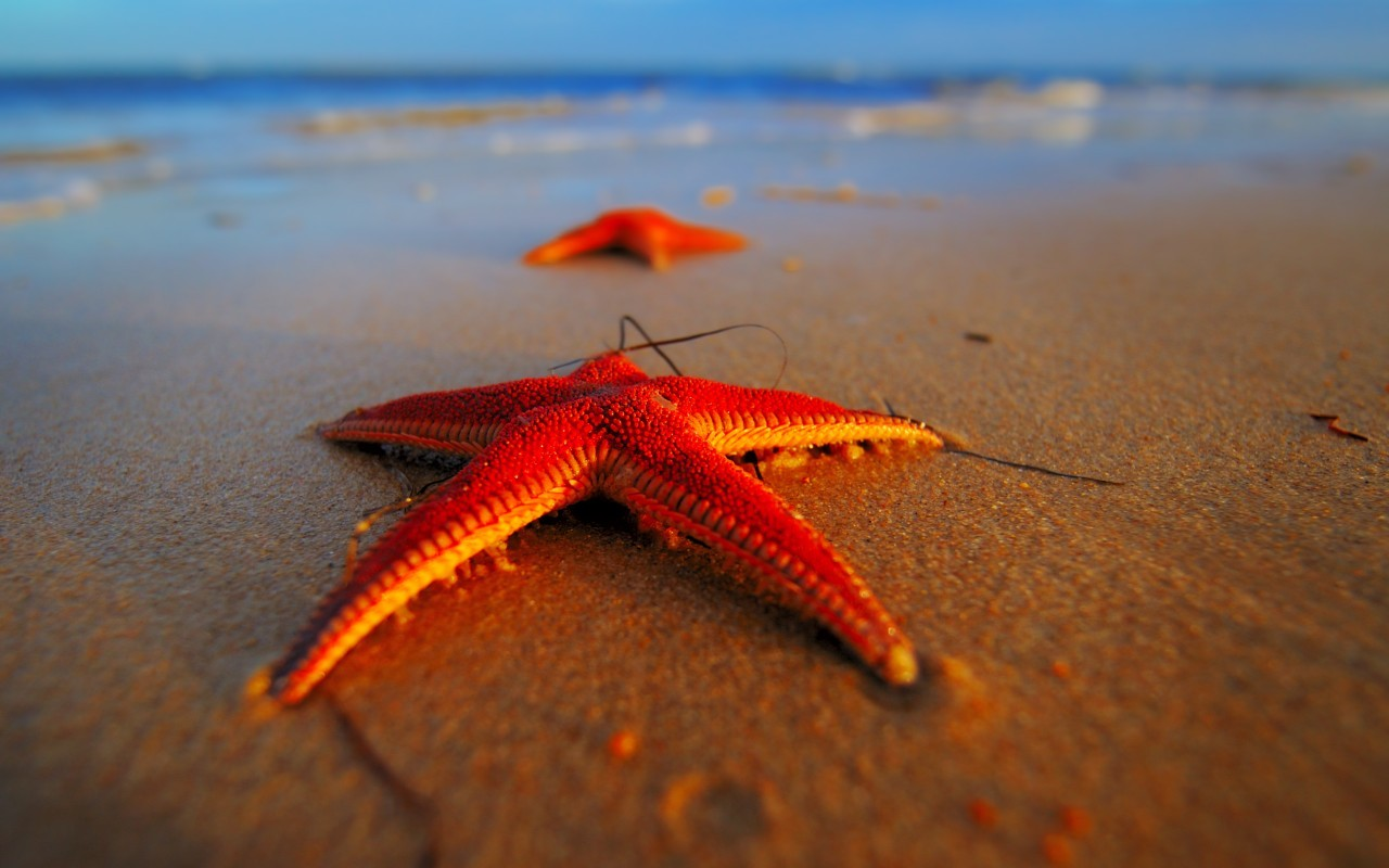 16073 download wallpaper Animals, Sea, Starfish screensavers and pictures for free