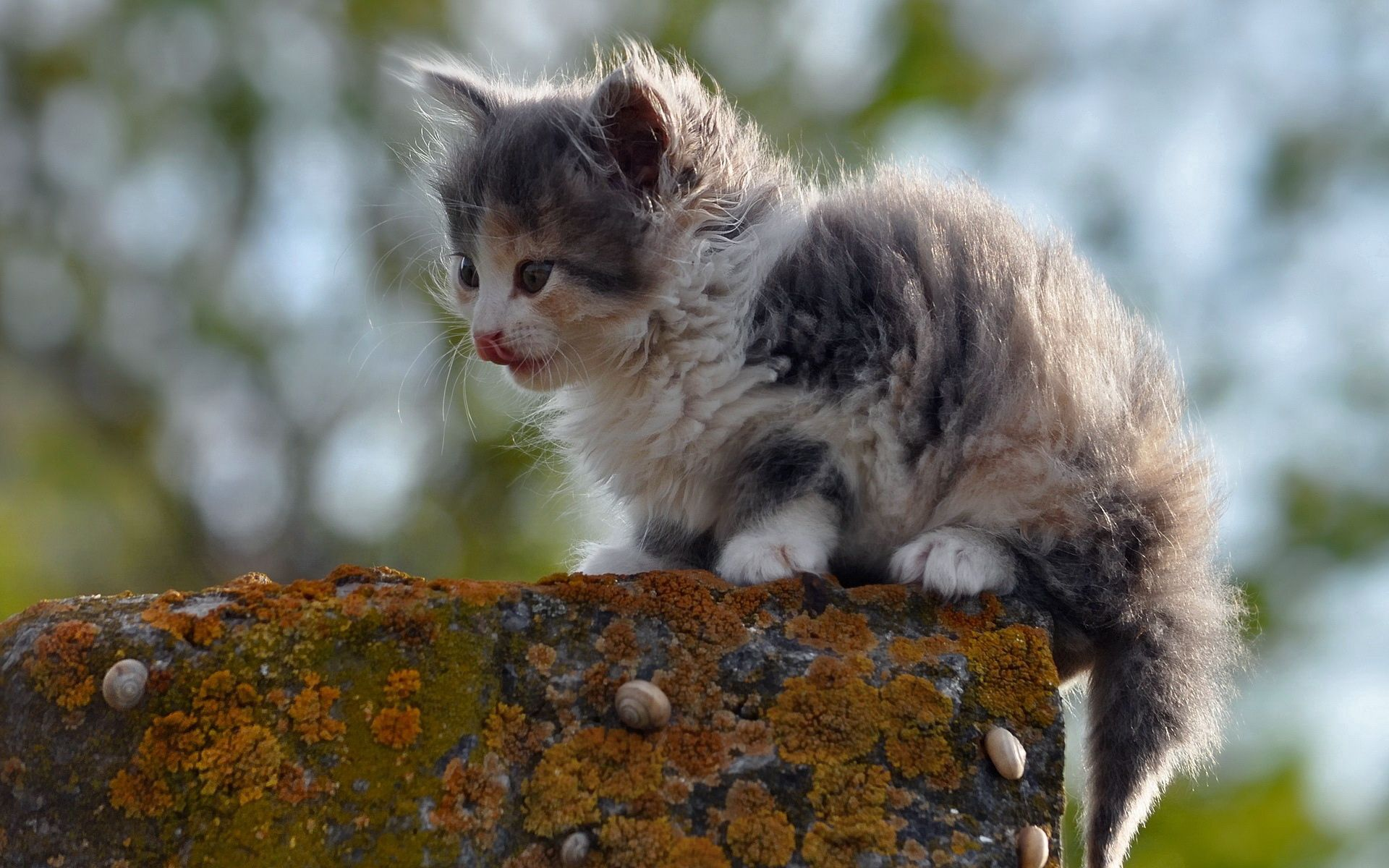 129356 Screensavers and Wallpapers Kitten for phone. Download Animals, Kitty, Kitten, Spotted, Spotty, Is Sitting, Sits, Street pictures for free