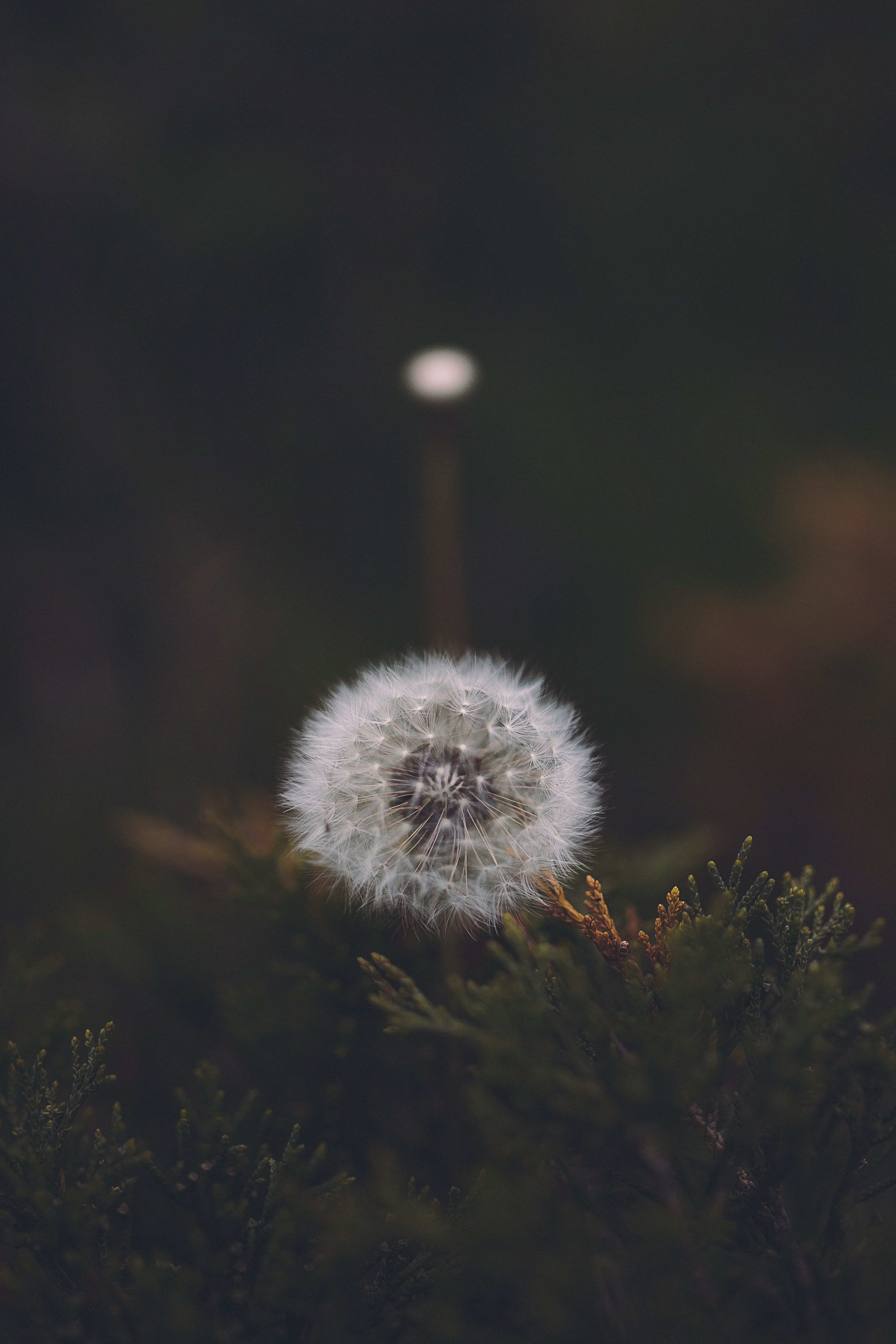 65002 free wallpaper 1080x2340 for phone, download images Flower, Macro, Fluffy, Dandelion, Seeds, Seed 1080x2340 for mobile