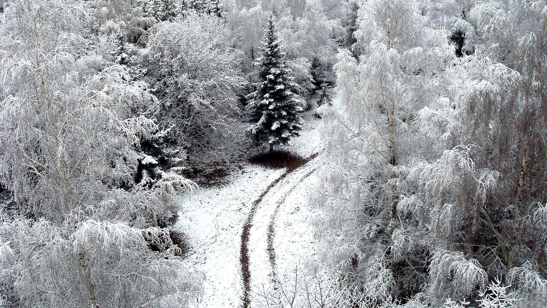 84793 Заставки и Обои Зима на телефон. Скачать Природа, Зима, Дорога, Снег, Иней, Деревья, Сверху, Заморозки картинки бесплатно