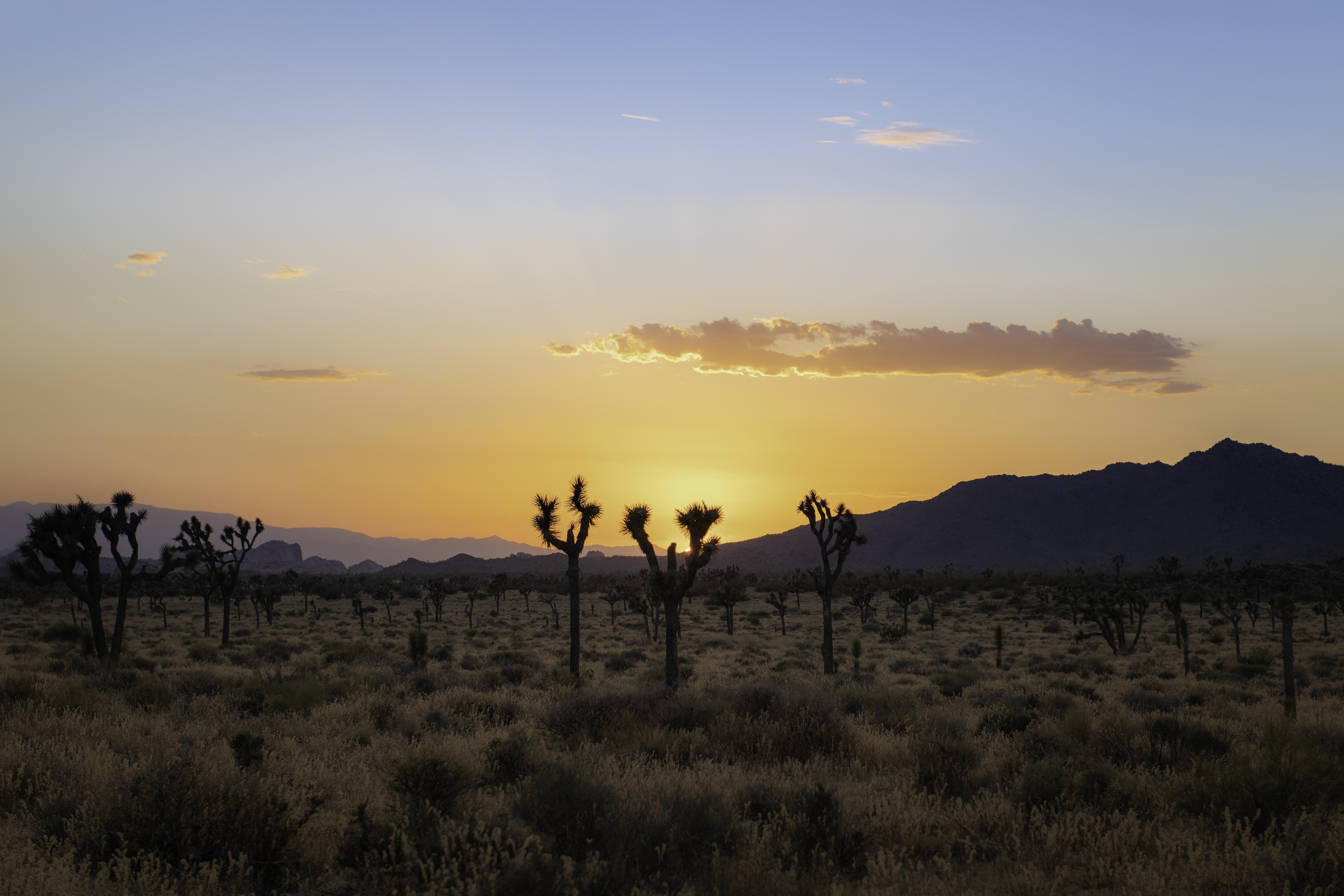 153400 Заставки и Обои Кактусы на телефон. Скачать Природа, Кактусы, Закат, Горы, Пустыня картинки бесплатно