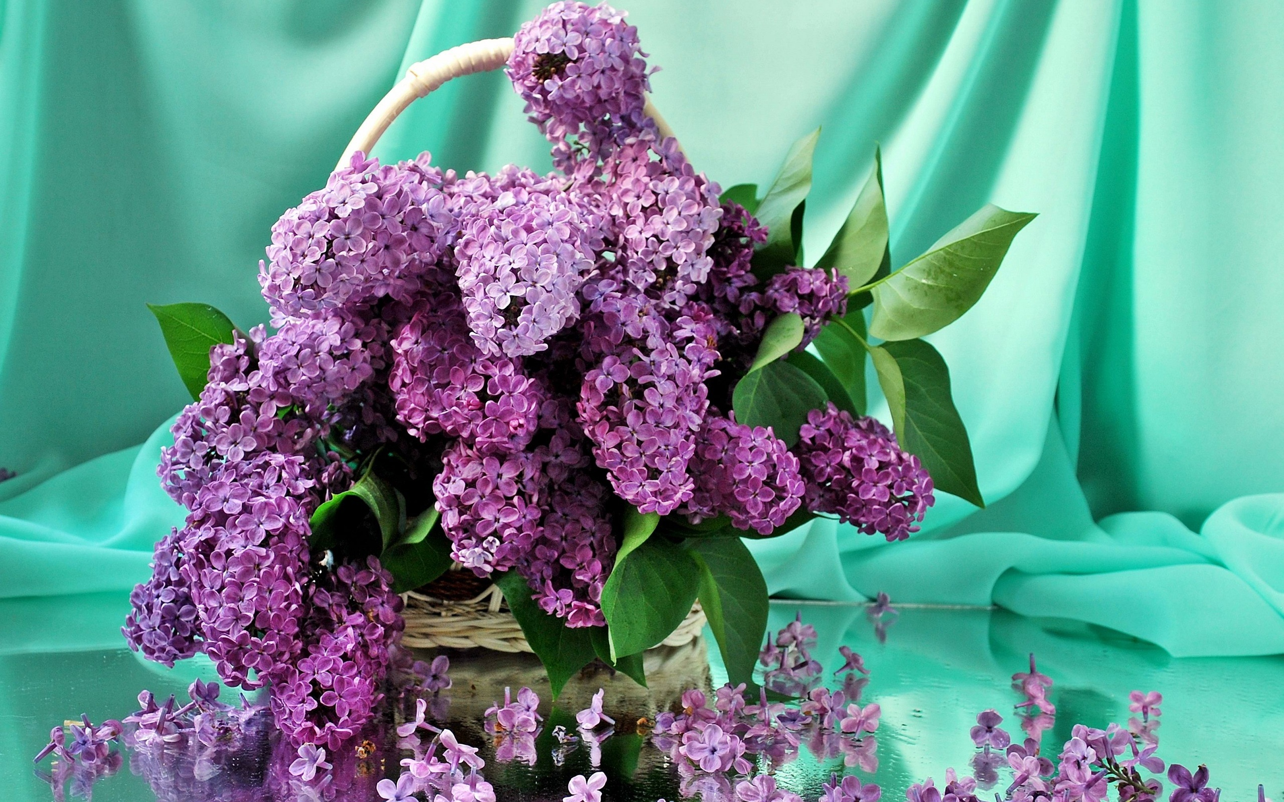 45029 скачать обои Растения, Цветы - заставки и картинки бесплатно