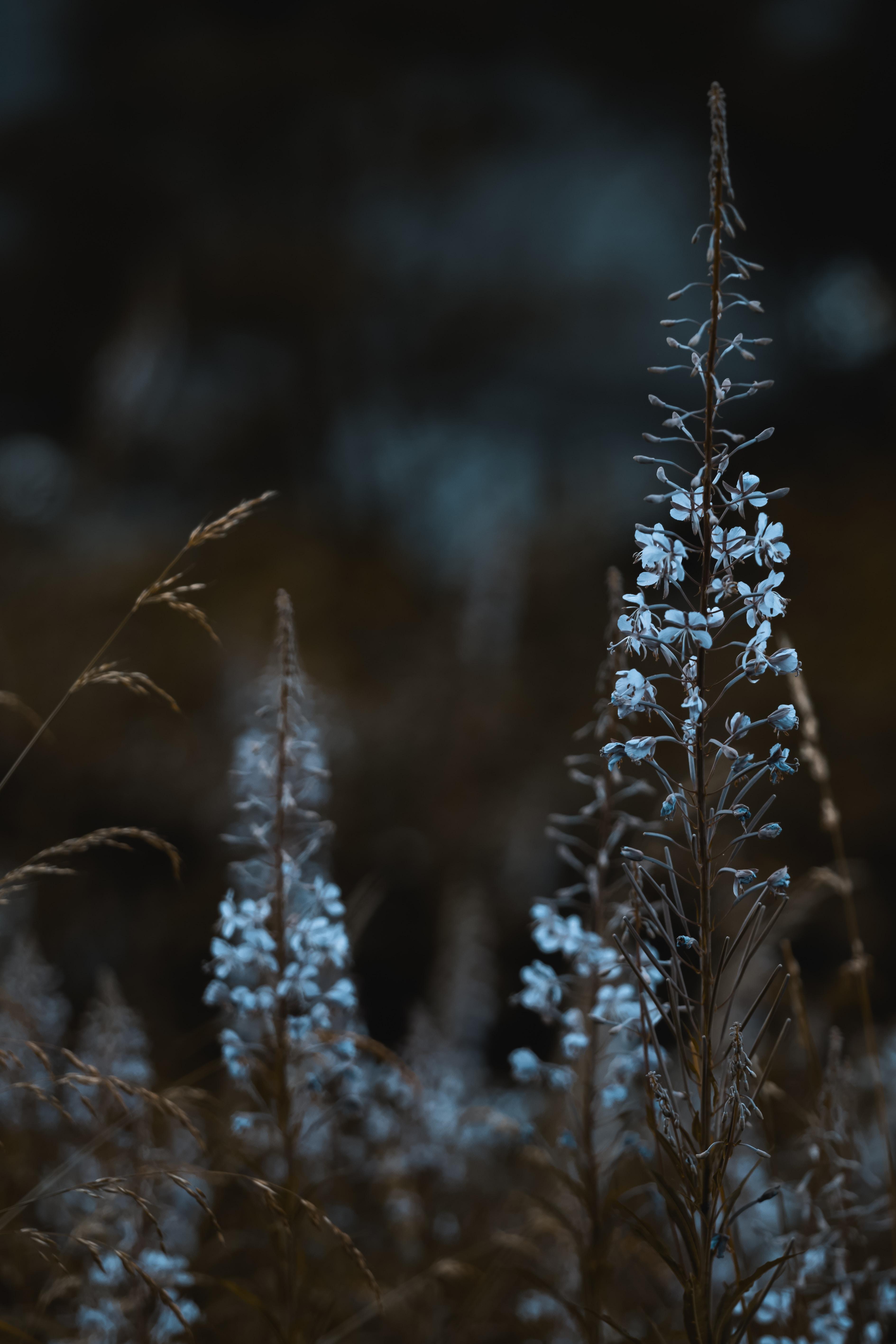 152393 скачать обои Макро, Голубой, Растения, Цветение, Дикий, Цветы - заставки и картинки бесплатно