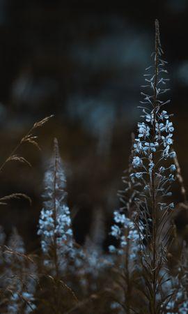 152393 descargar fondo de pantalla Macro, Plantas, Florecer, Floración, Salvaje, Flores: protectores de pantalla e imágenes gratis