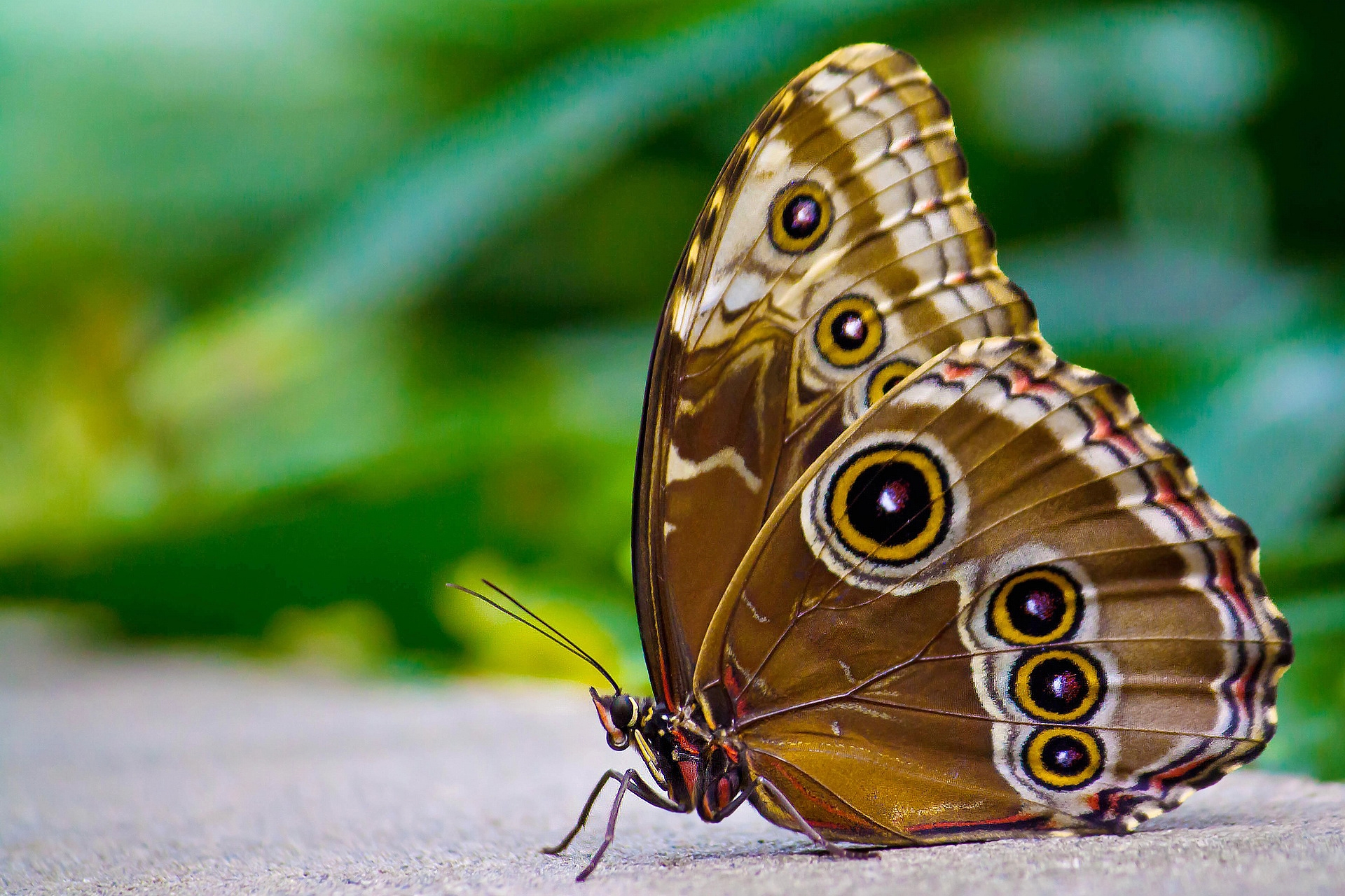 70877 Screensavers and Wallpapers Patterns for phone. Download Surface, Patterns, Macro, Insect, Butterfly, Wings pictures for free