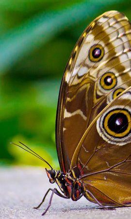お使いの携帯電話の70877スクリーンセーバーと壁紙昆虫。 大きい, マクロ, バタフライ, 蝶, 翼, 表面, 昆虫, パターンの写真を無料でダウンロード