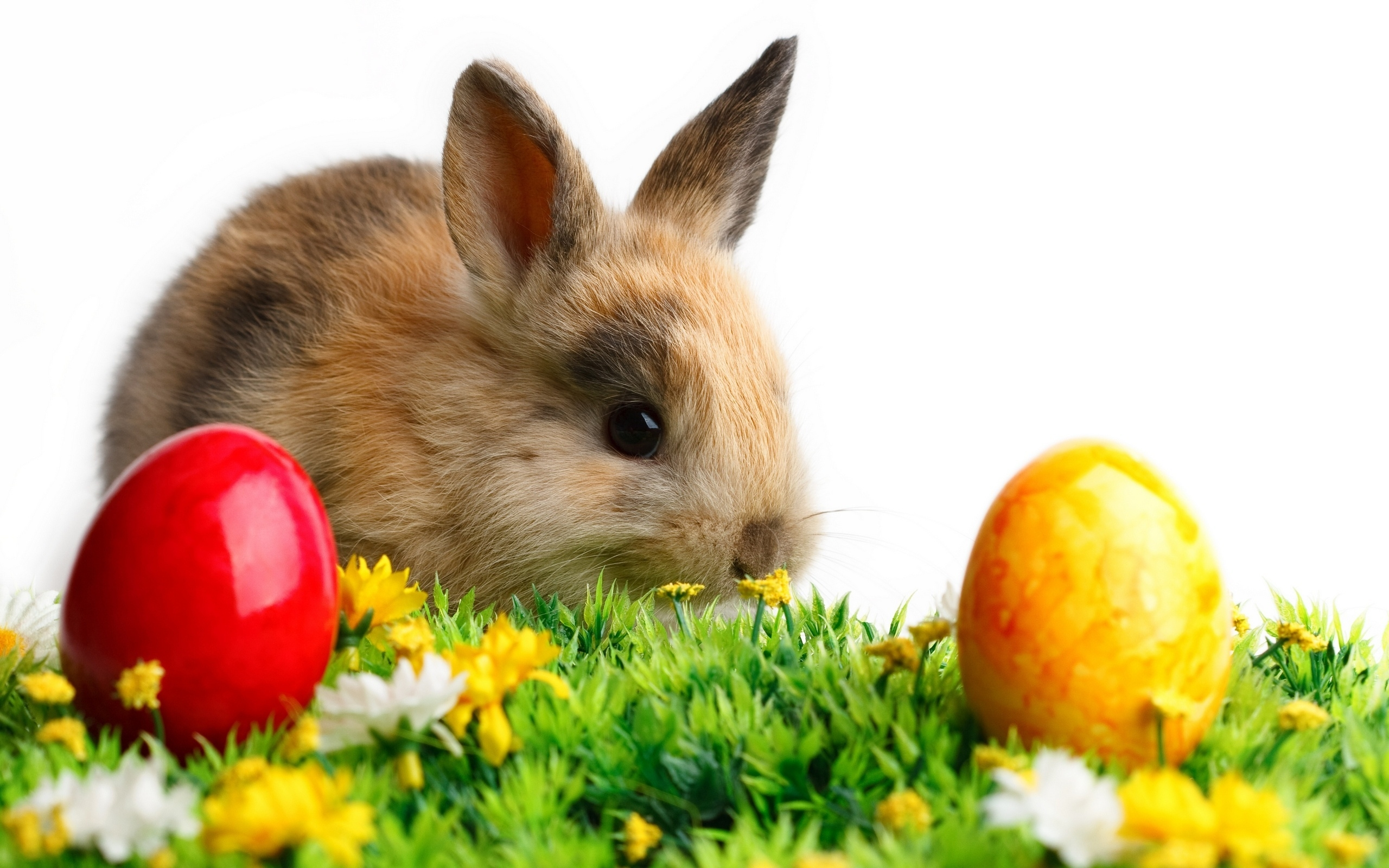 35204 Screensavers and Wallpapers Rabbits for phone. Download Animals, Rabbits pictures for free