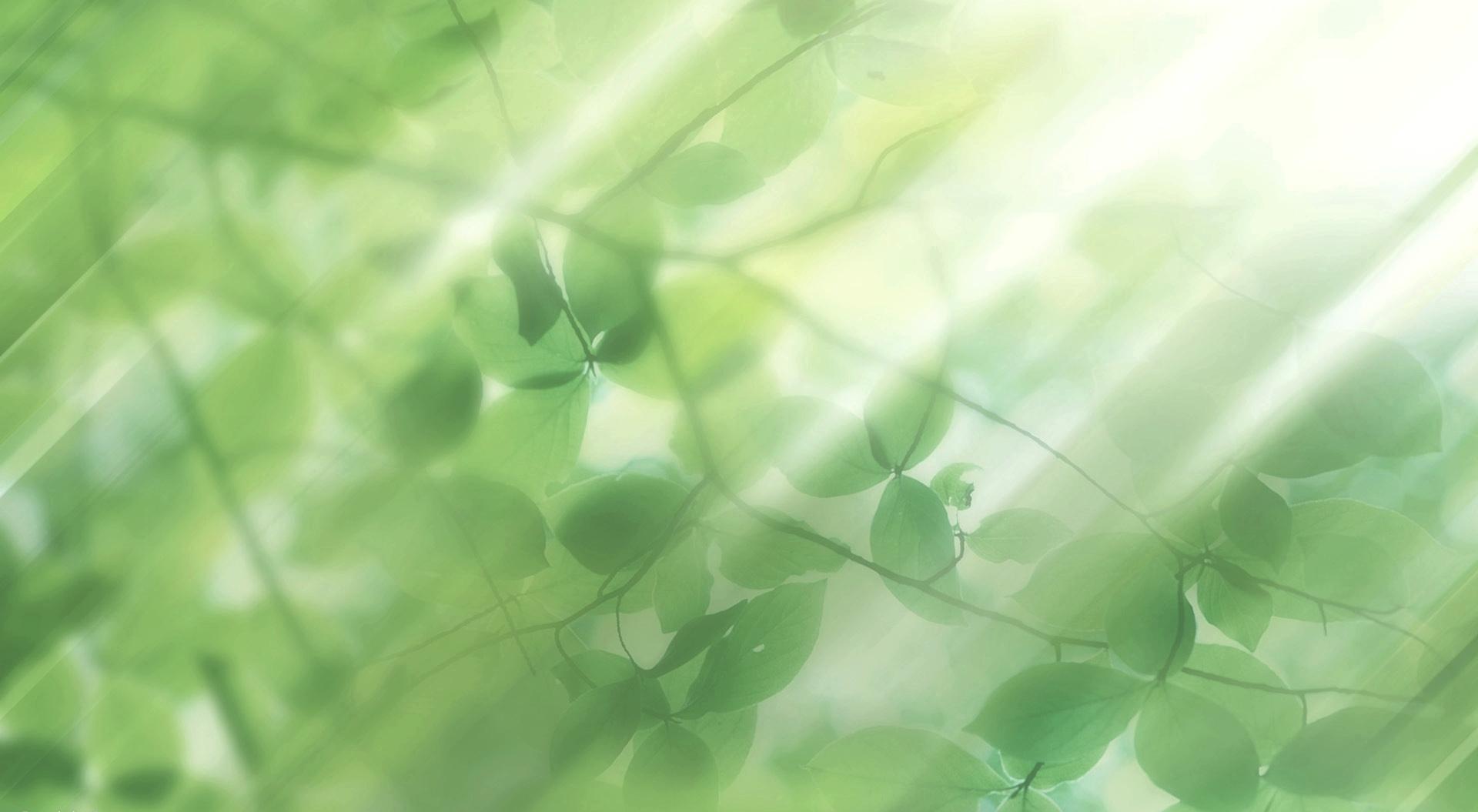 Скачать картинку Растения, Фон, Листья в телефон бесплатно.