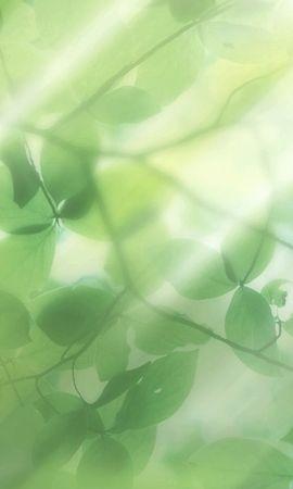 22739 скачать обои Растения, Фон, Листья - заставки и картинки бесплатно
