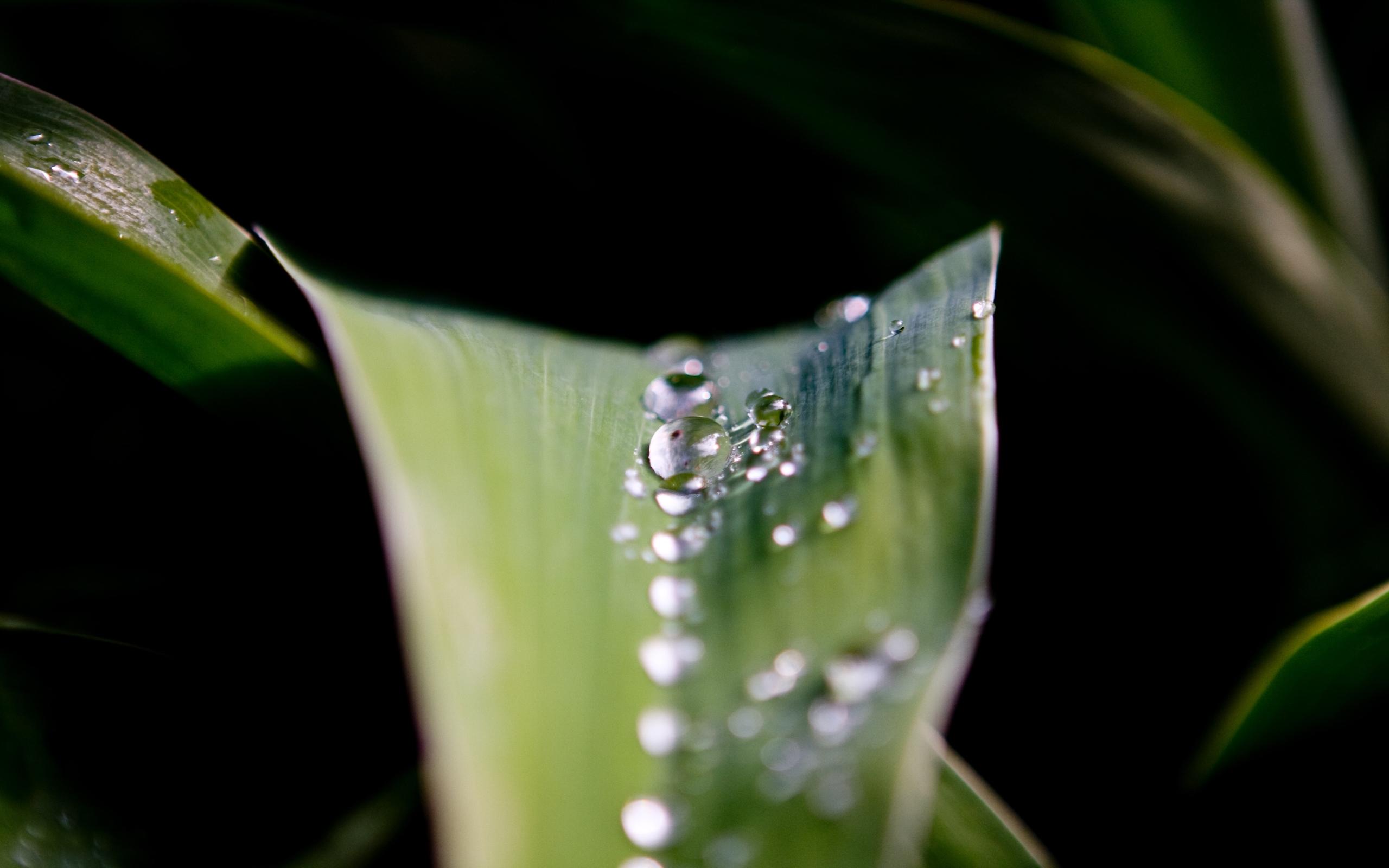 4595 скачать обои Растения, Листья, Капли - заставки и картинки бесплатно