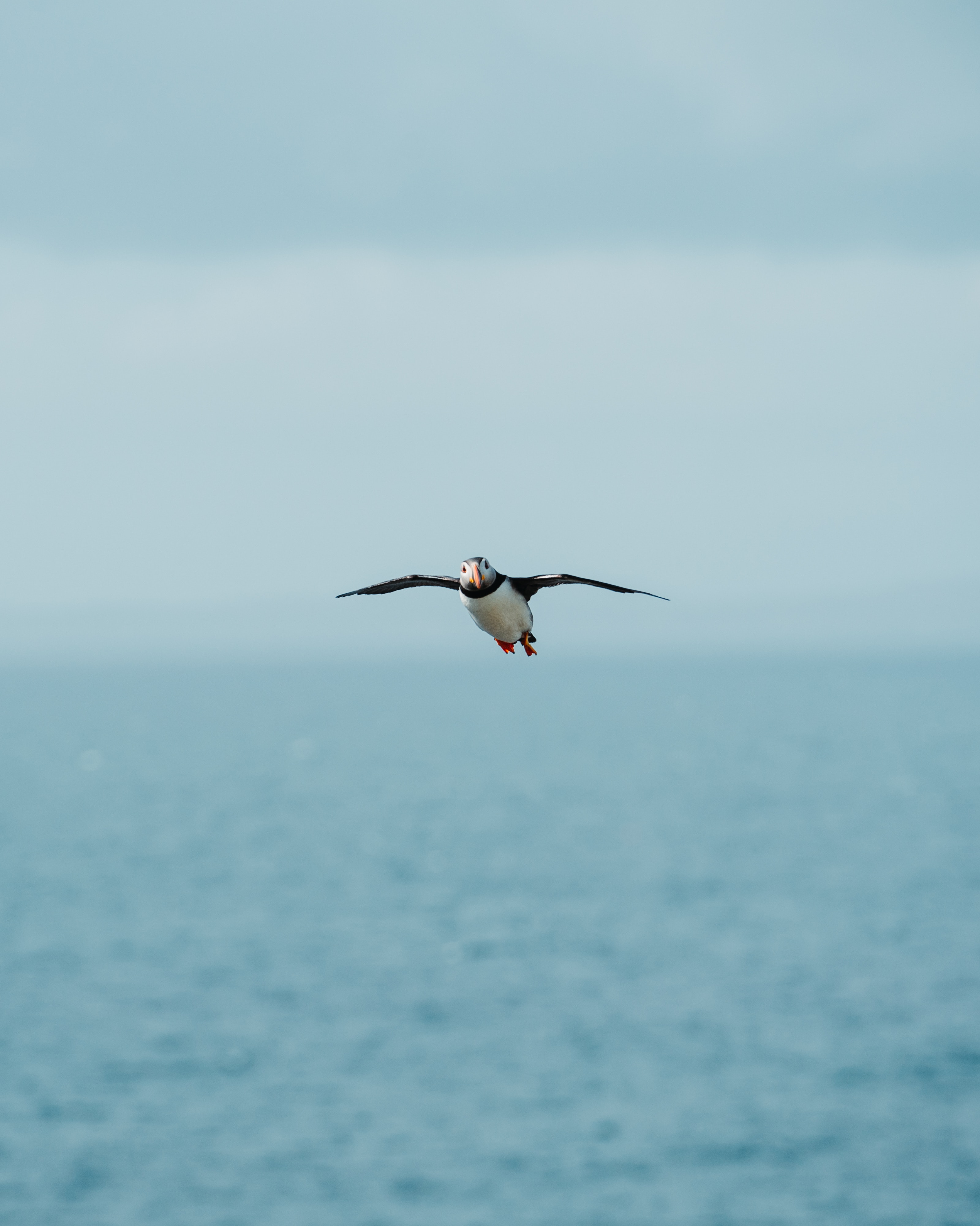 87157 download wallpaper Animals, Gull, Seagull, Bird, Flight, Sea, Wings screensavers and pictures for free