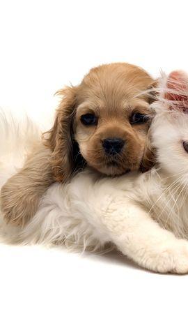 45570 скачать обои Животные, Кошки (Коты, Котики), Собаки - заставки и картинки бесплатно