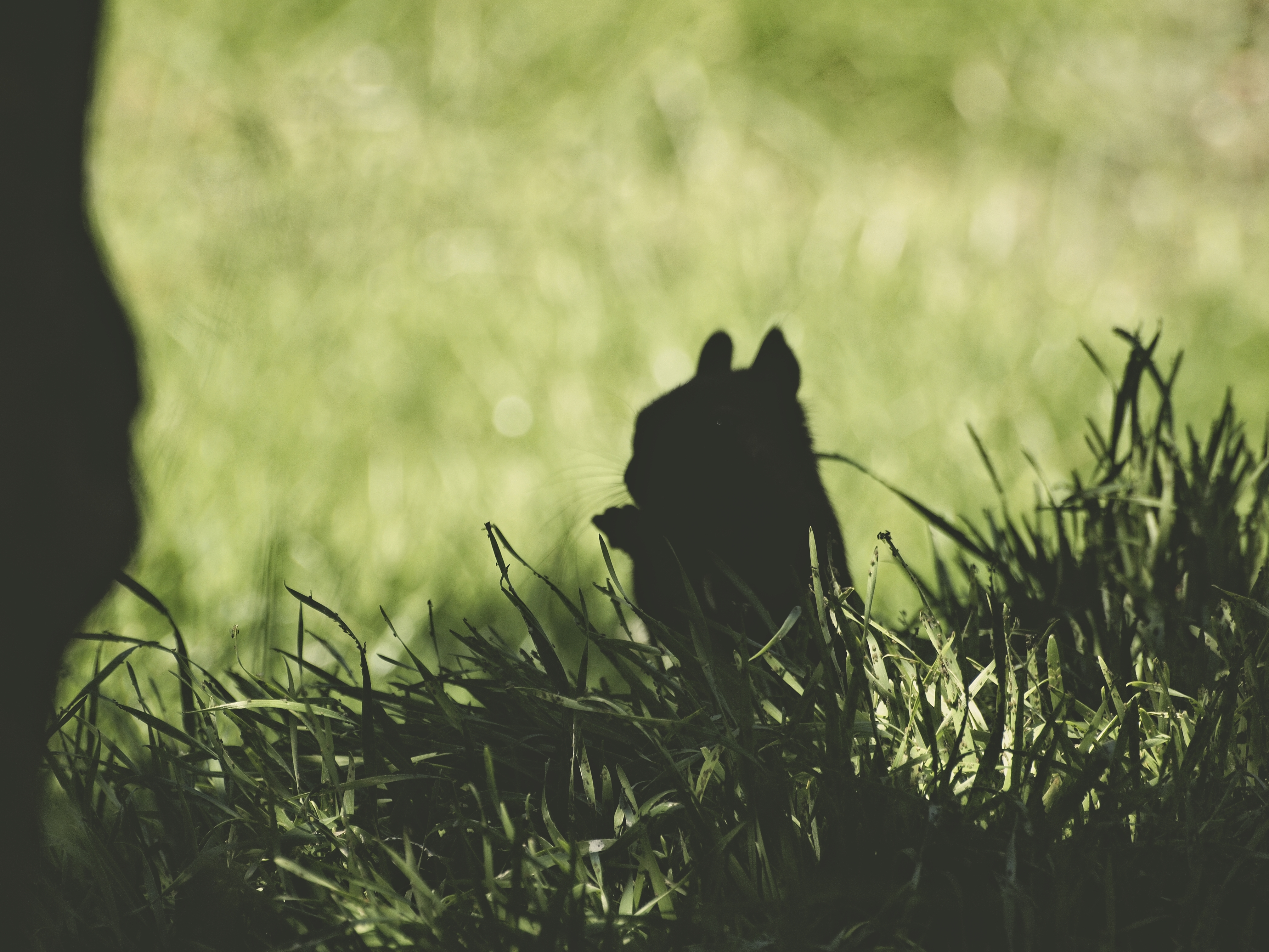 104805 download wallpaper Animals, Squirrel, Silhouette, Dark, Grass, Animal screensavers and pictures for free