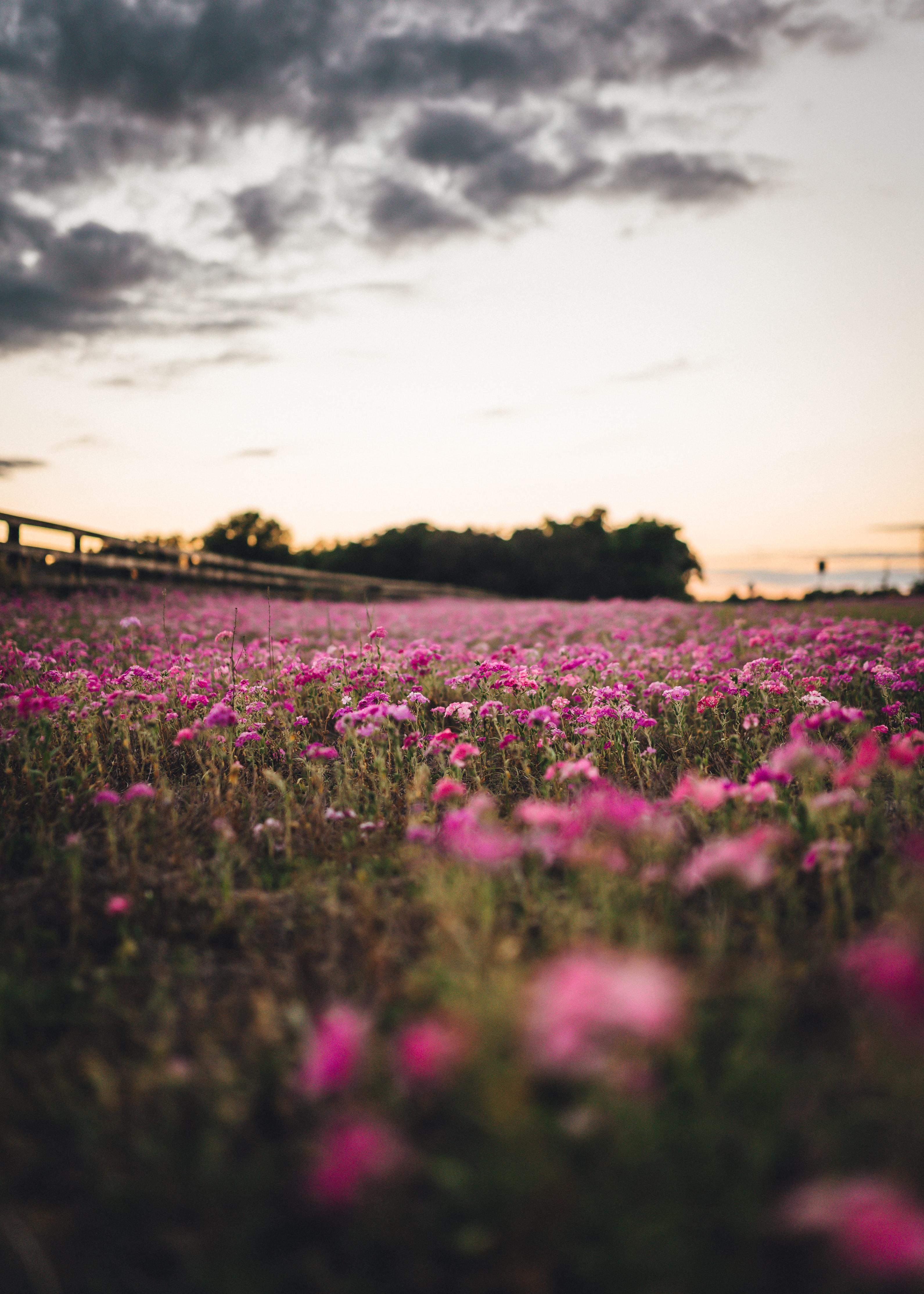 118815 скачать обои Поле, Деревья, Природа, Цветы - заставки и картинки бесплатно