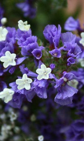 7041 скачать обои Растения, Цветы - заставки и картинки бесплатно