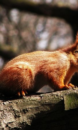 6 download wallpaper Animals, Nature, Squirrel screensavers and pictures for free