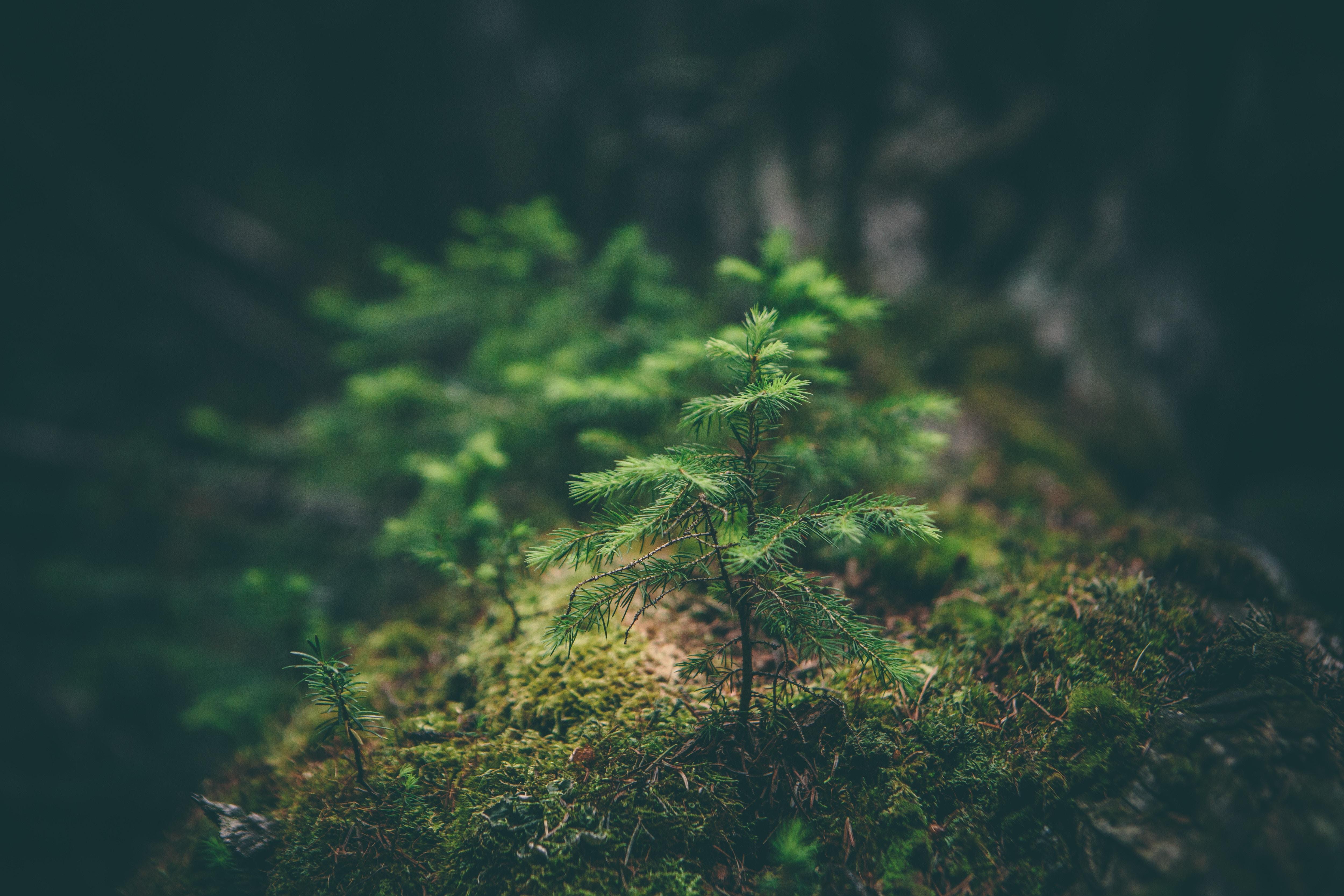 60828 Hintergrundbild herunterladen Natur, Grass, Nadeln, Makro, Sämling - Bildschirmschoner und Bilder kostenlos