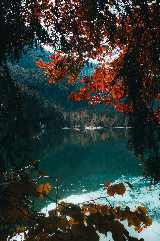 87838 скачать обои Озеро, Ветки, Природа, Вода, Деревья, Лес - заставки и картинки бесплатно
