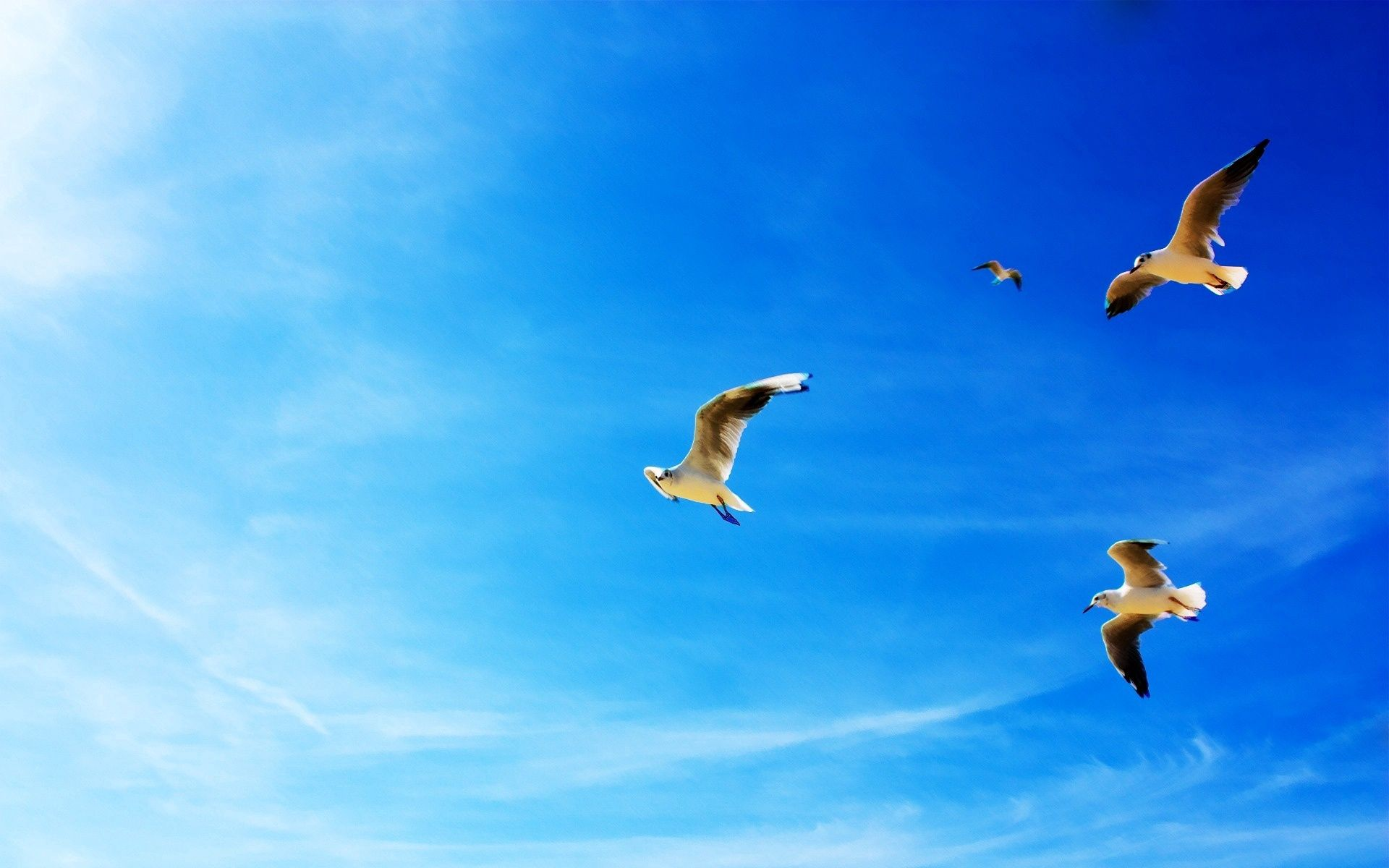 56029 download wallpaper Animals, Blue Sky, Flight, Seagulls screensavers and pictures for free