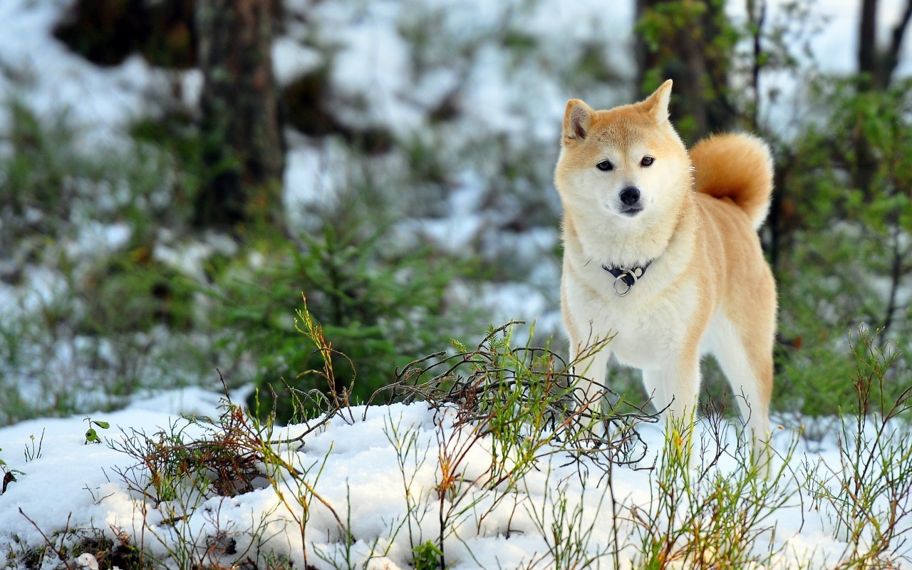 16395 download wallpaper Animals, Winter, Dogs screensavers and pictures for free