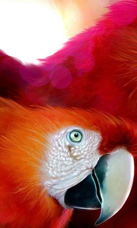 4422 baixar papel de parede Animais, Aves, Papagaios - protetores de tela e imagens gratuitamente