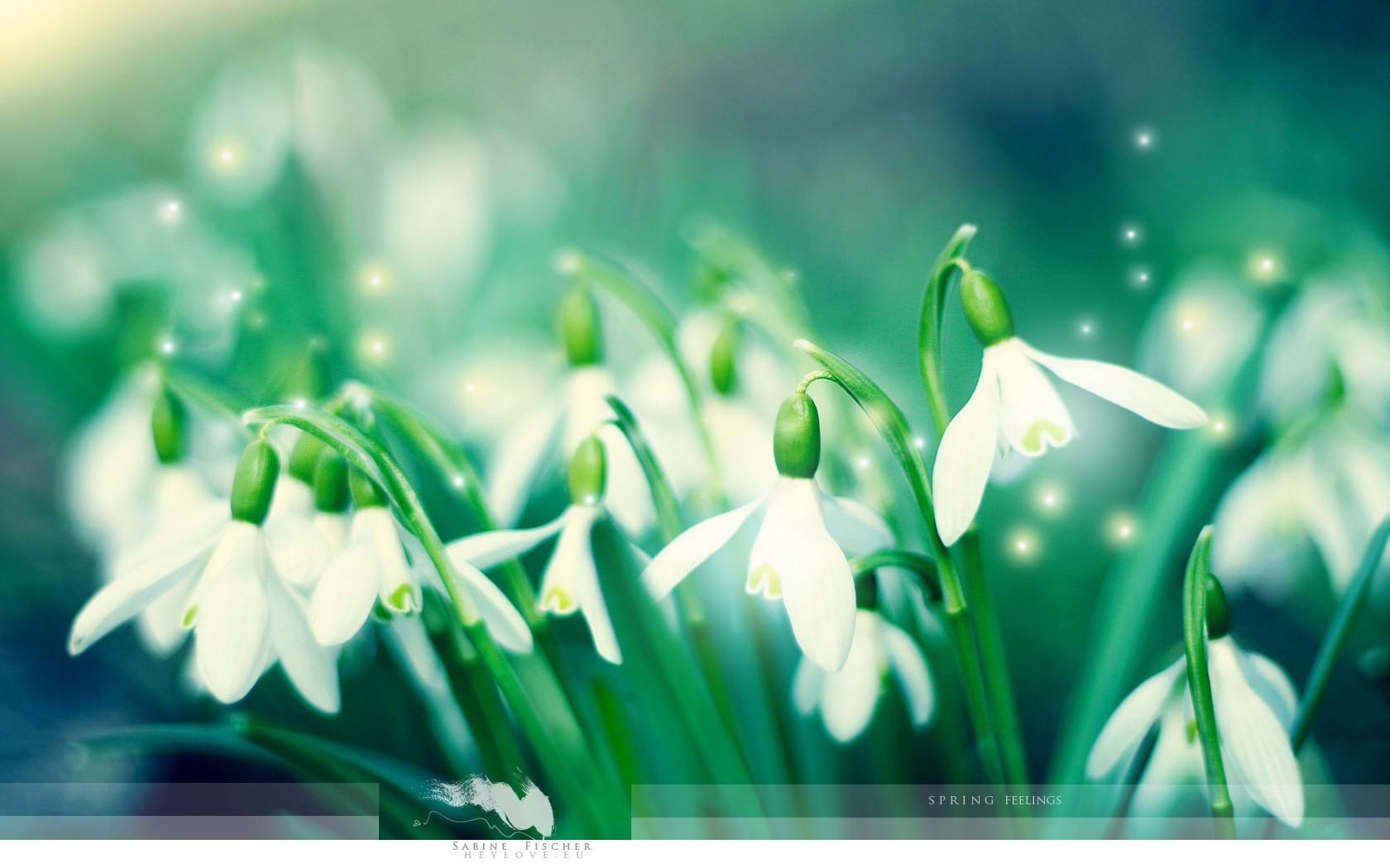 18289 скачать обои Растения, Цветы, Фон, Подснежники - заставки и картинки бесплатно