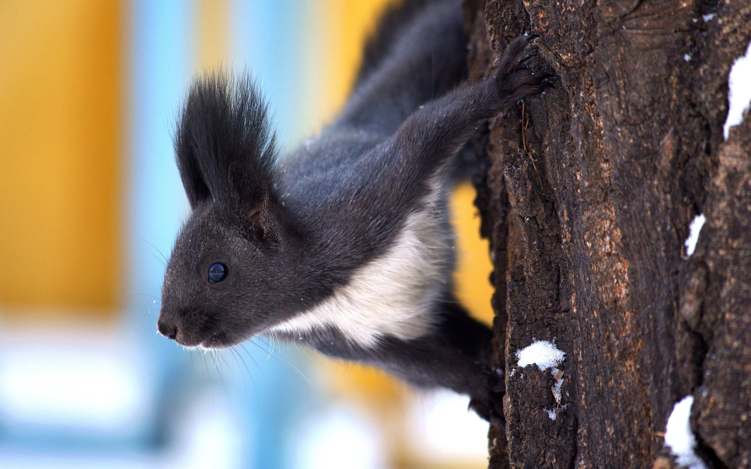 137198 download wallpaper Animals, Squirrel, Wood, Tree, Snow, Crawl screensavers and pictures for free