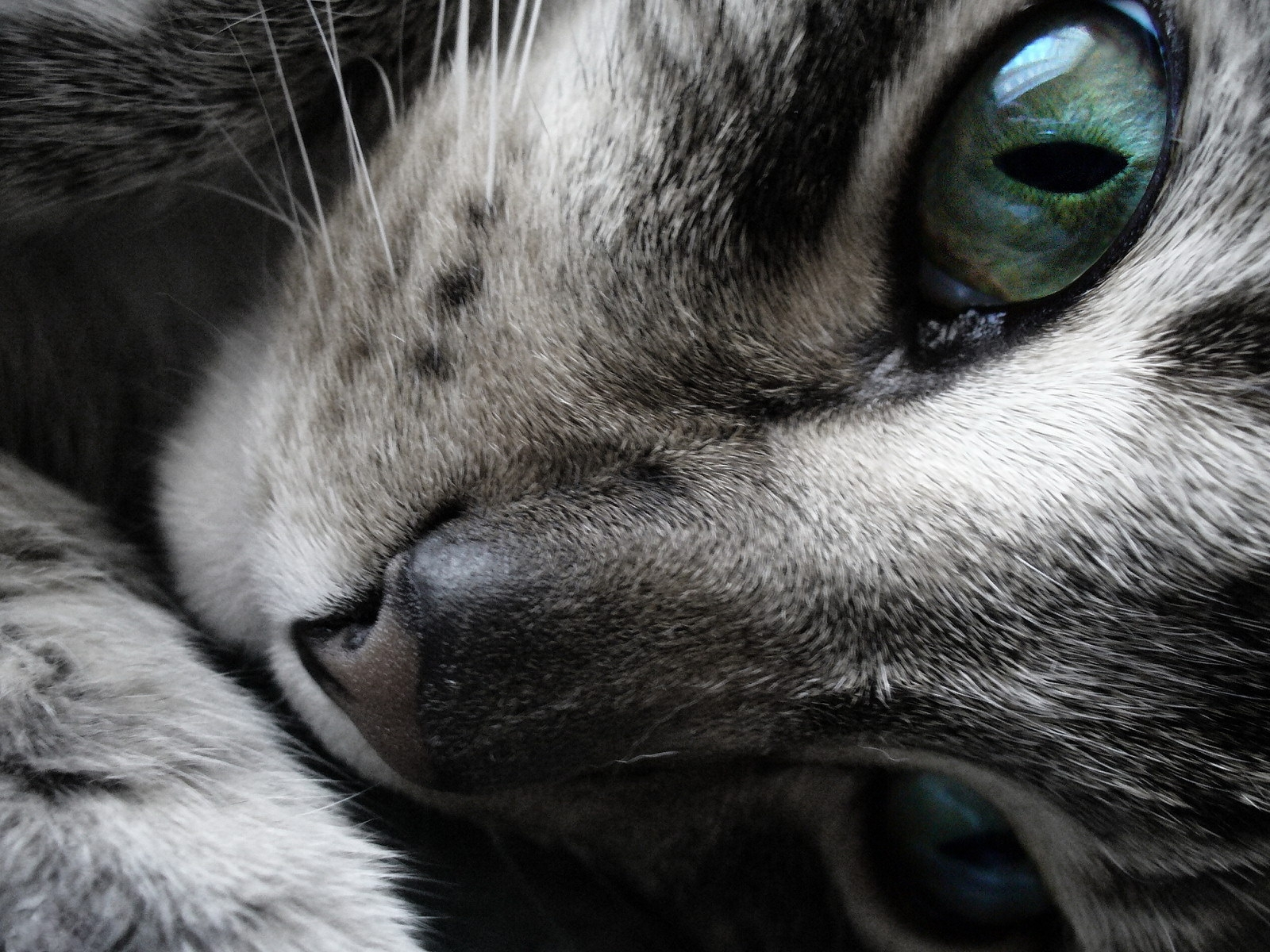 3400 download wallpaper Animals, Cats screensavers and pictures for free