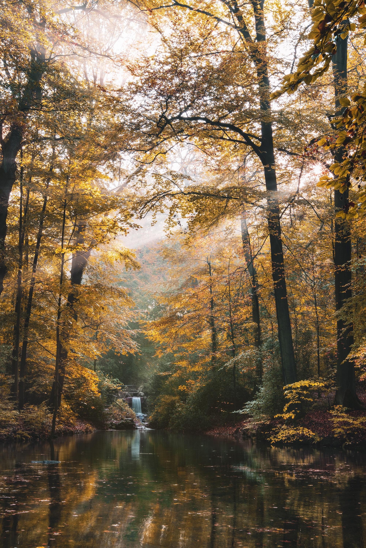 151134 скачать обои Пейзаж, Река, Природа, Деревья, Осень, Лес - заставки и картинки бесплатно