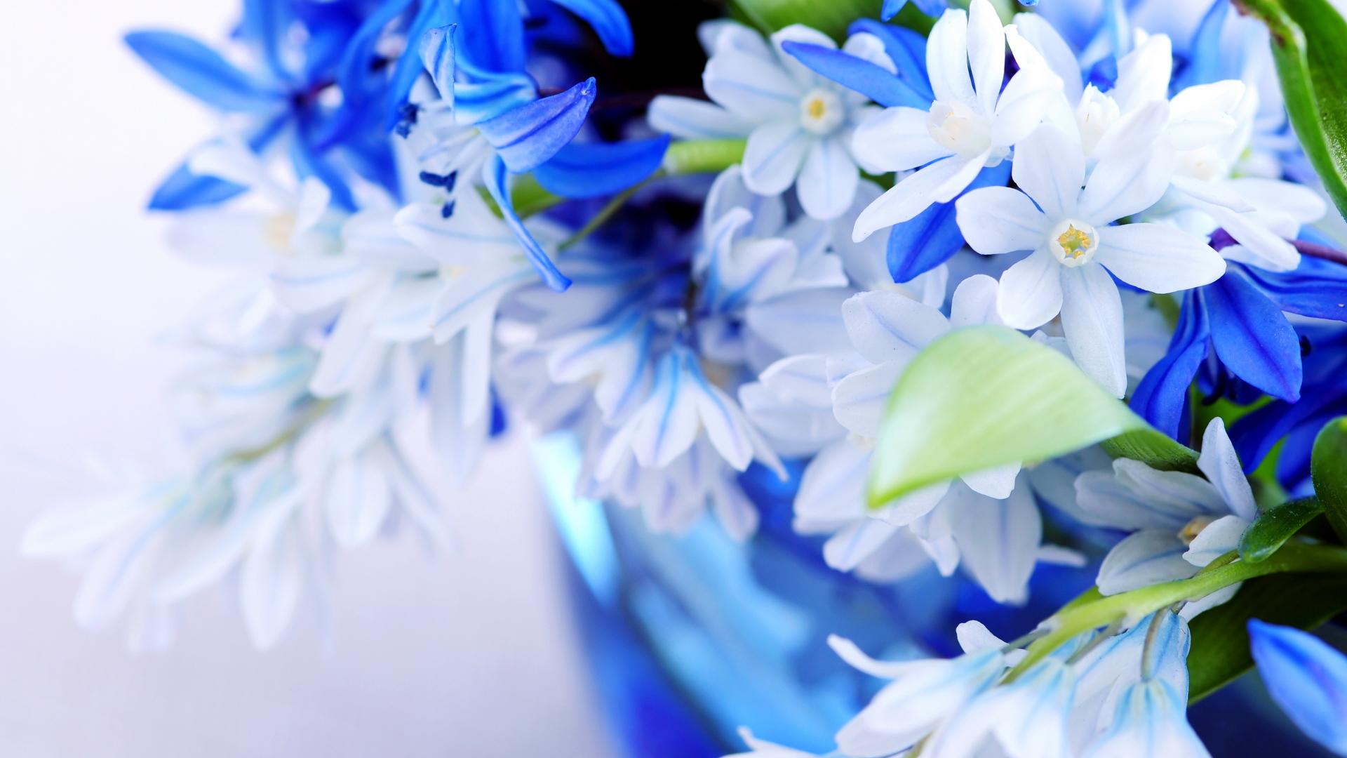 26320 скачать обои Растения, Цветы - заставки и картинки бесплатно