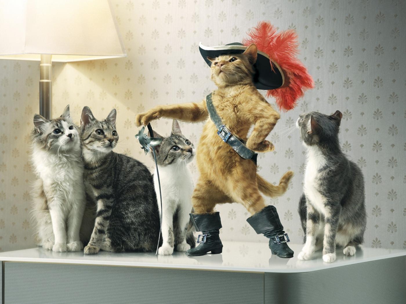 37515 Bildschirmschoner und Hintergrundbilder Humor auf Ihrem Telefon. Laden Sie Humor, Tiere, Katzen Bilder kostenlos herunter