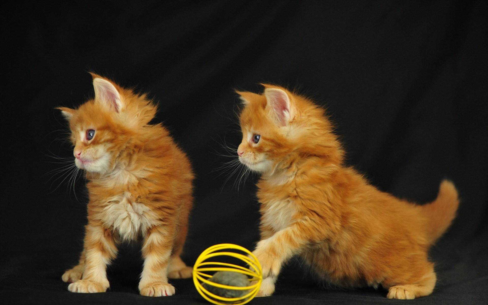 24495 скачать обои Животные, Кошки (Коты, Котики) - заставки и картинки бесплатно