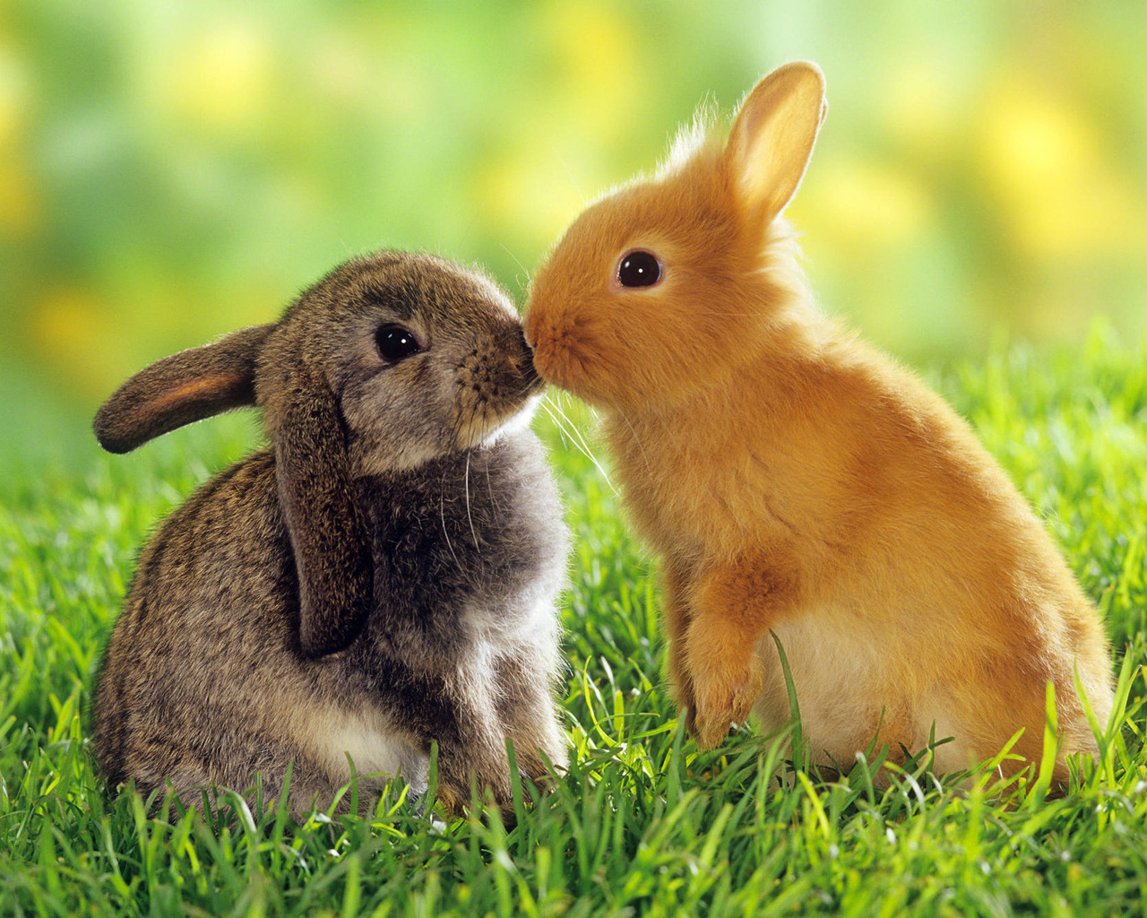 22773 download wallpaper Animals, Rabbits screensavers and pictures for free