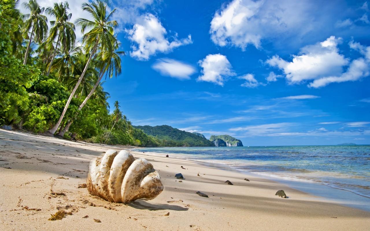 20811 скачать обои Пейзаж, Море, Облака, Пляж, Песок, Пальмы, Ракушки - заставки и картинки бесплатно
