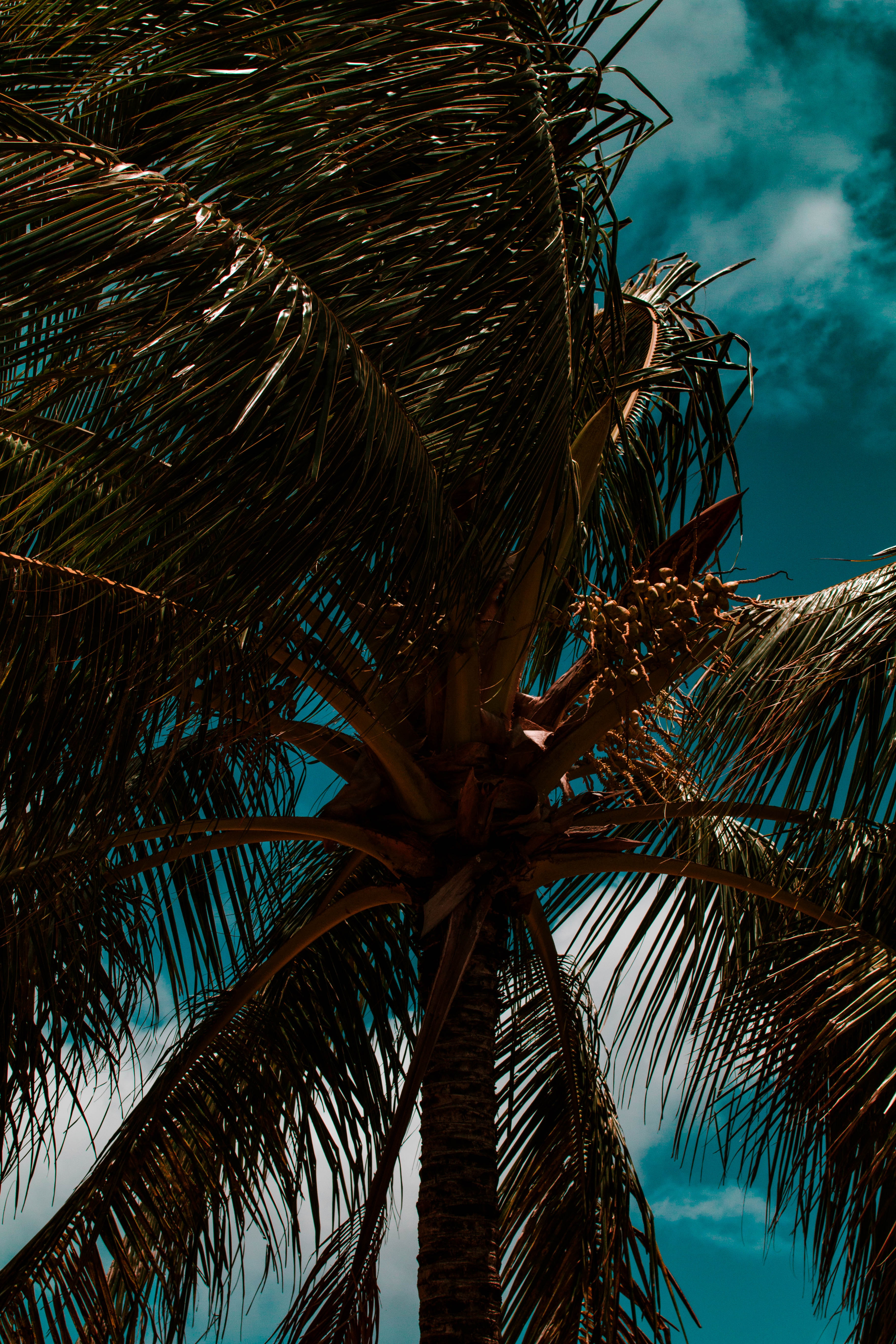 55488 download wallpaper Nature, Palm, Branches, Leaves, Sky, Clouds, Tropics, Wind screensavers and pictures for free