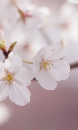 23332 скачать обои Растения, Цветы - заставки и картинки бесплатно