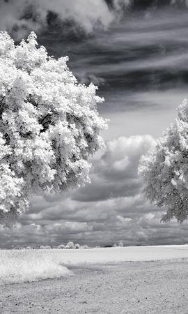 25467 скачать обои Пейзаж, Деревья - заставки и картинки бесплатно