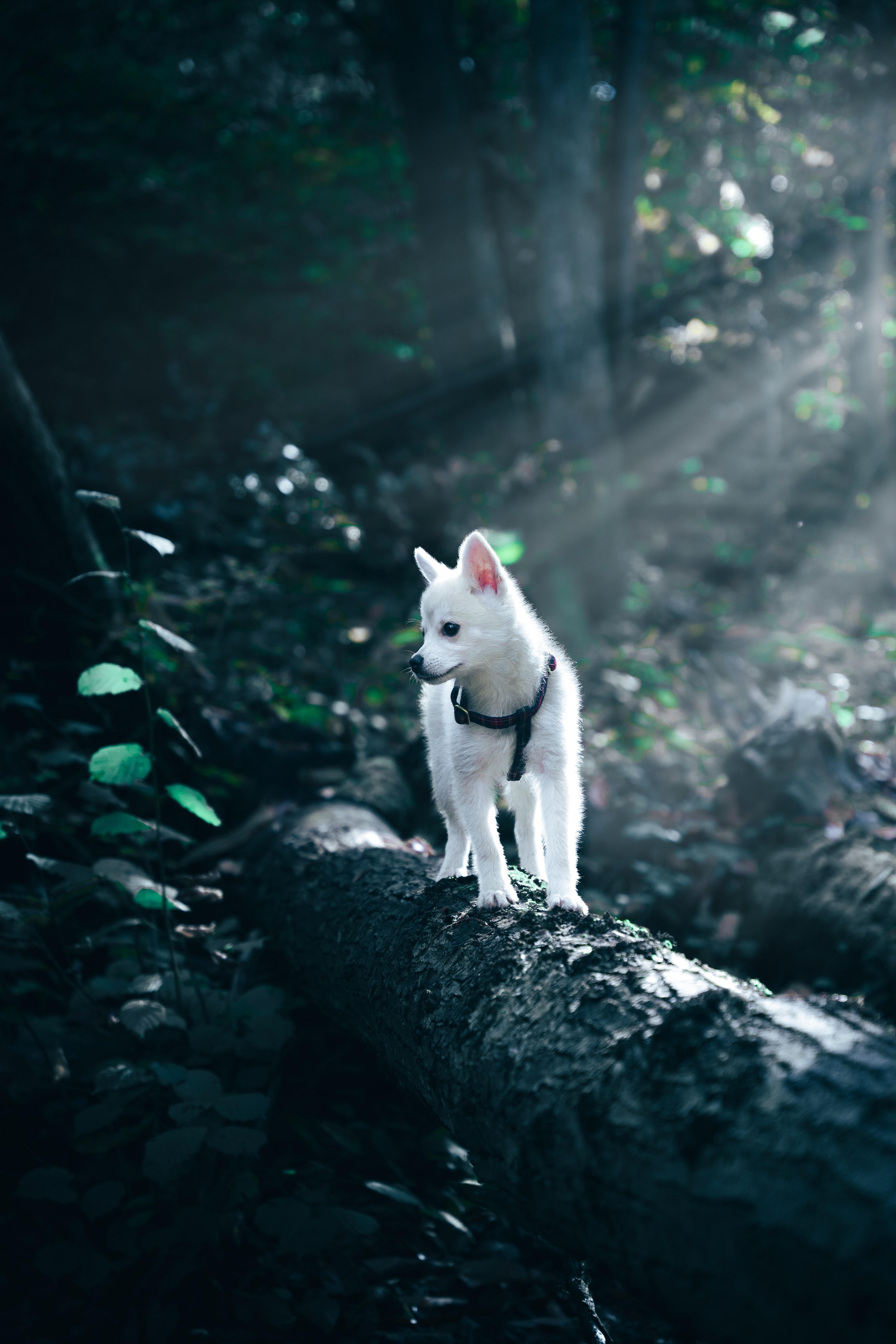 124566 Screensavers and Wallpapers Puppy for phone. Download Animals, Dog, Pet, Puppy pictures for free