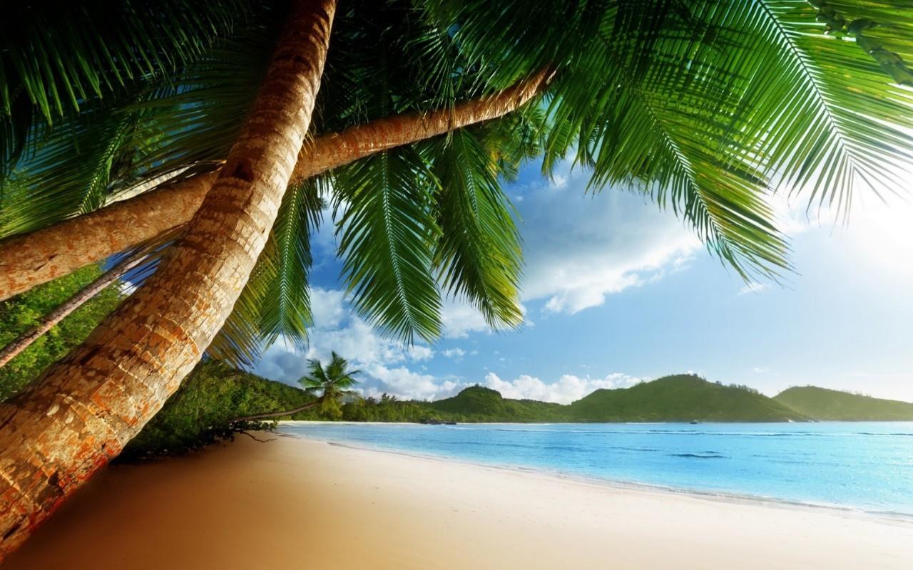 19465 скачать обои Пейзаж, Море, Пляж, Пальмы - заставки и картинки бесплатно