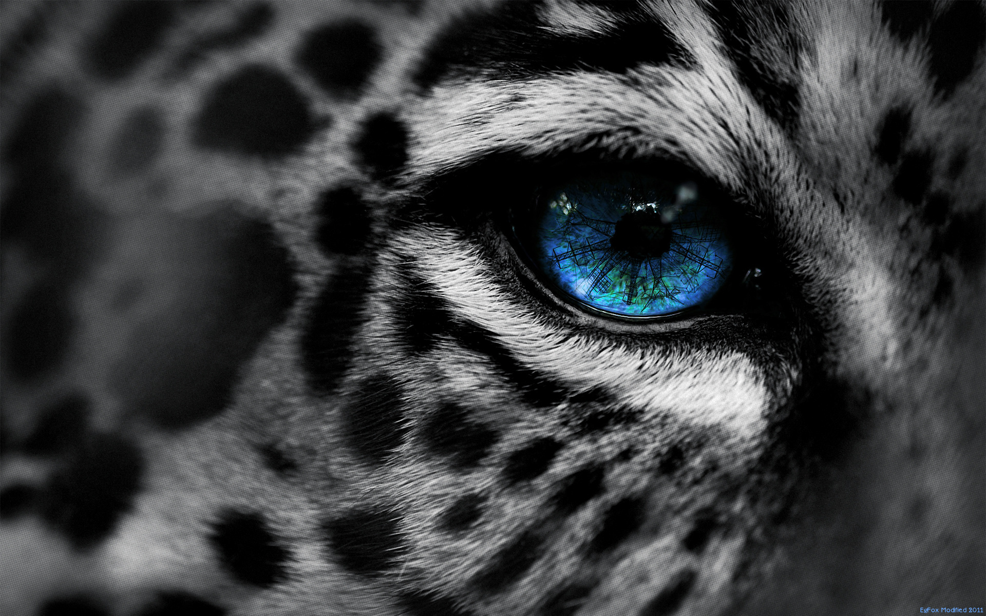 18181 download wallpaper Animals, Leopards screensavers and pictures for free