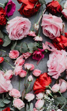 113772 завантажити шпалери Квіти, Композиція, Склад, Рожевий, Рози - заставки і картинки безкоштовно