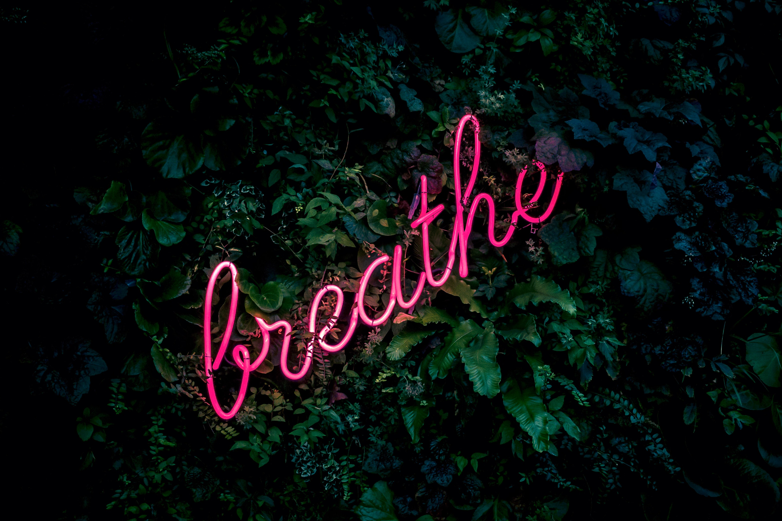 152420 Screensavers and Wallpapers Foliage for phone. Download Words, Neon, Inscription, Foliage, Breath pictures for free