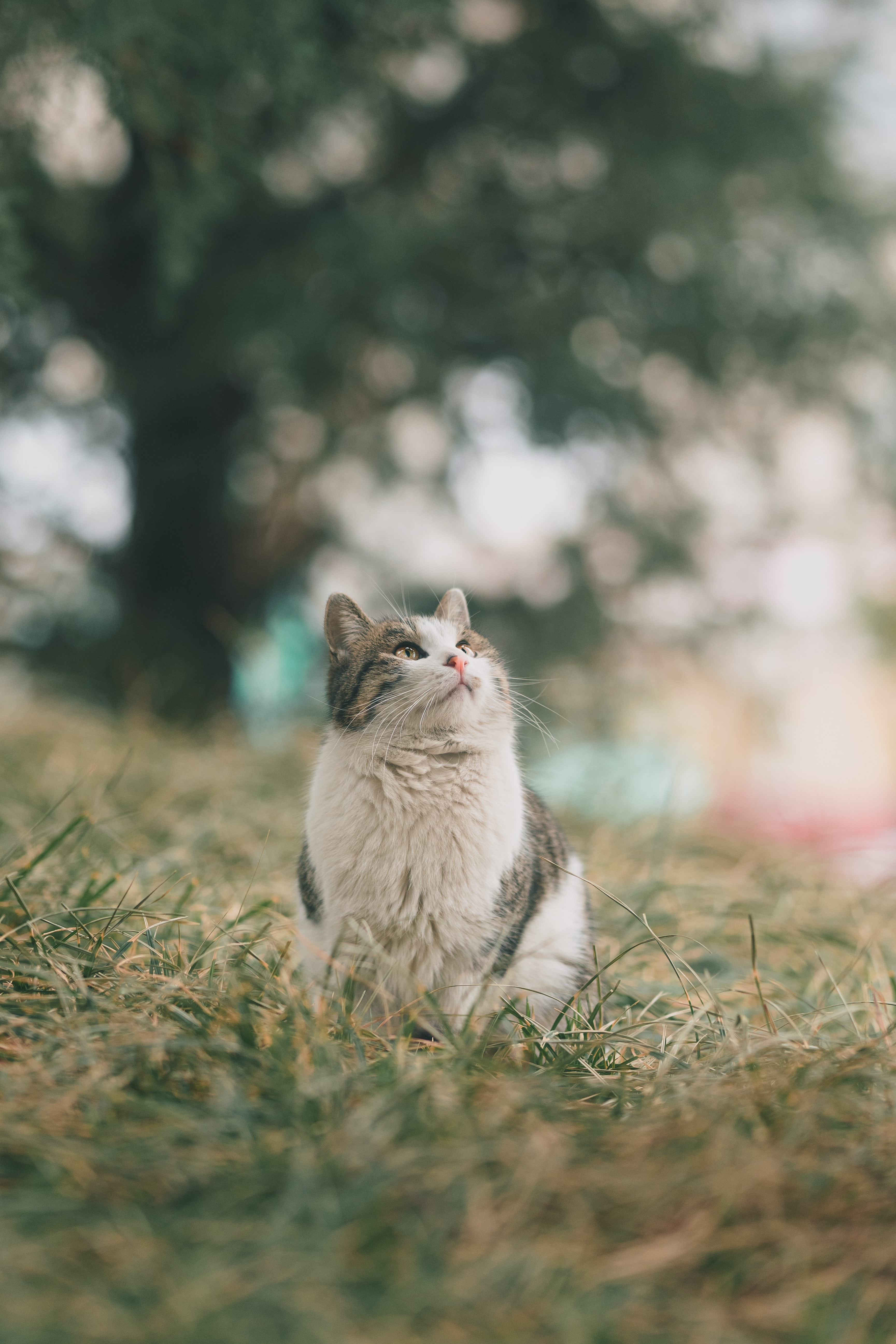 151909 download wallpaper Animals, Cat, Pet, Sight, Opinion, Fluffy, Grass screensavers and pictures for free