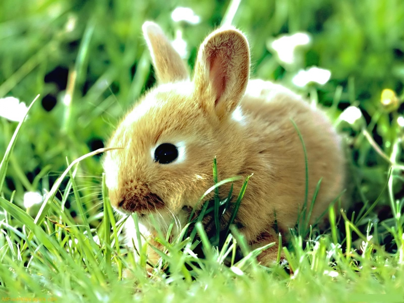 47584 Screensavers and Wallpapers Rabbits for phone. Download Animals, Rabbits pictures for free