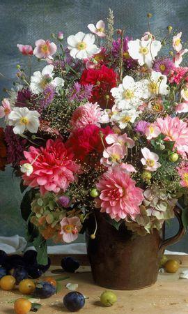 14418 скачать обои Растения, Цветы - заставки и картинки бесплатно