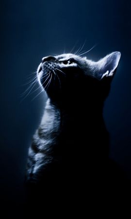 7572 download wallpaper Animals, Cats screensavers and pictures for free
